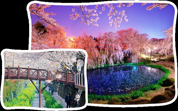 韓國春季賞櫻兩日遊